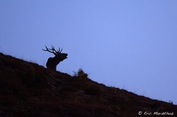 cerf_ambiance-15